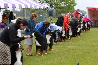 Sweeps 6-9mo Puppy Dog BMDCA 2010