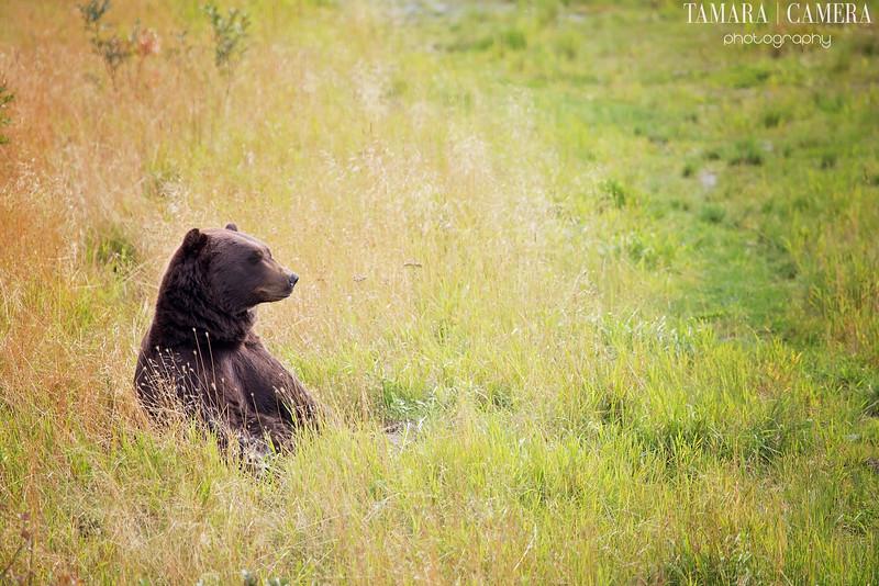 Yogi Bear-2.jpg