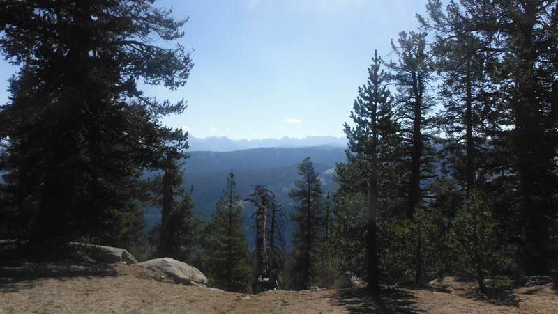 sequoia 036.JPG