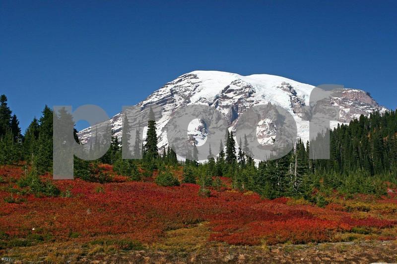 Mt. Rainier & fall color 5514.jpg