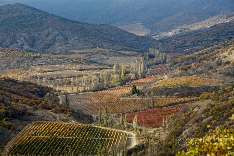 Grape fields in eastern Crimea, October 2013