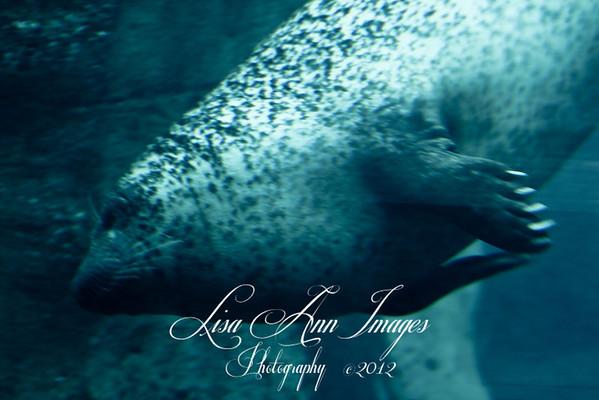 Toledo Zoo 2012