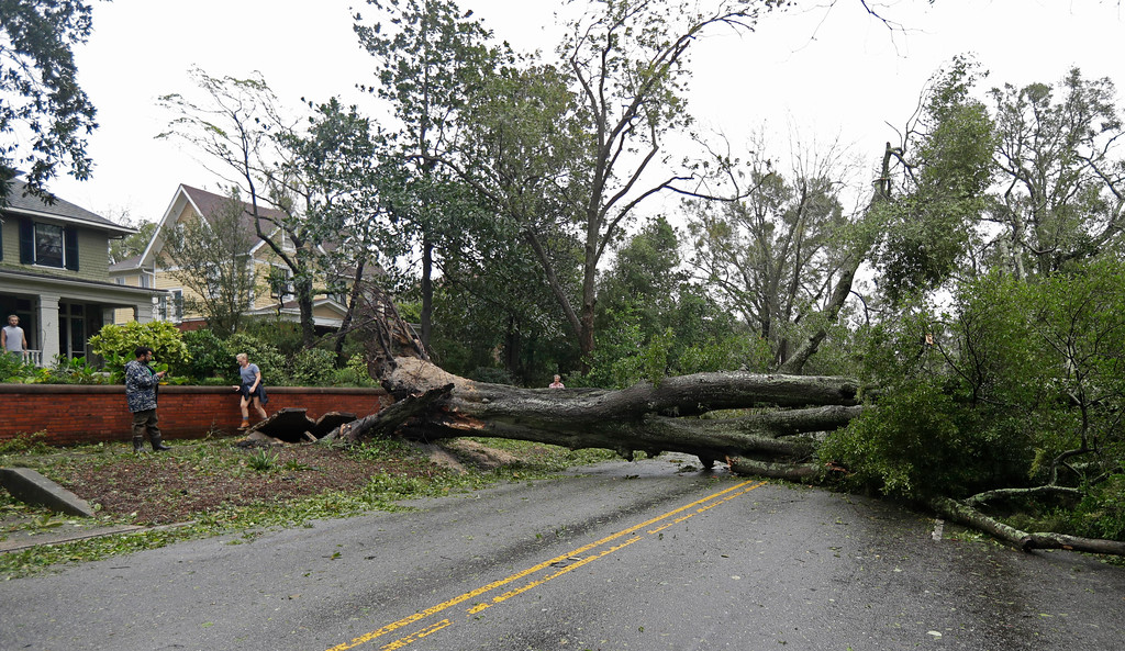 . People walk past a tree uprooted by strong winds lies across a street in Wilmington, N.C., after Hurricane Florence made landfall Friday, Sept. 14, 2018. (AP Photo/Chuck Burton)