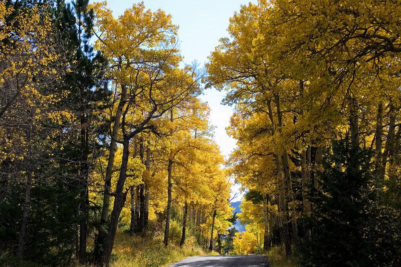 Aspen Road.jpg