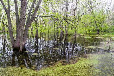 Fischer Woods Forest Preserve