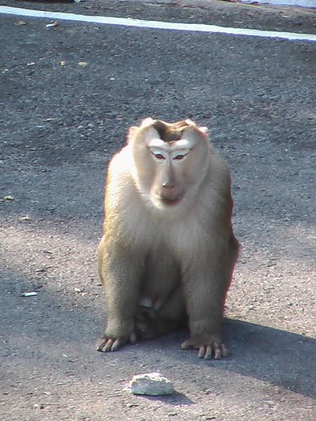 Khao Yai National Park - Thailand