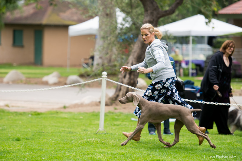 2019 Pasadena Kennel Club-8099.jpg