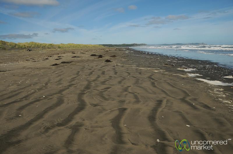 The Shoreline of Parque Nacional de Chiloe - Chile