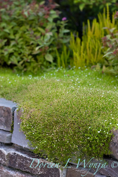 The Chartreuse Garden_1021.jpg