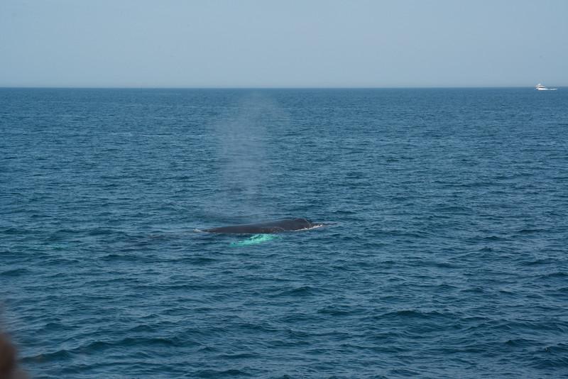 humpbacks-4189.jpg