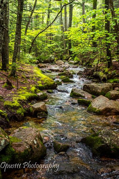 8- Acadia National Park, Maine.JPG