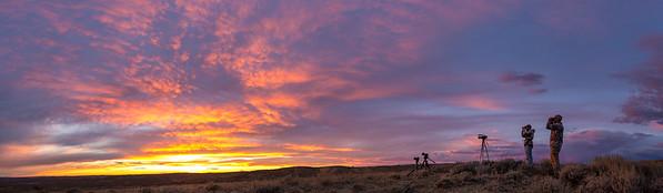 Pronghorn Antelope - Colorado 2015