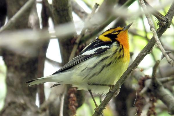 Lake Erie Birding 2013