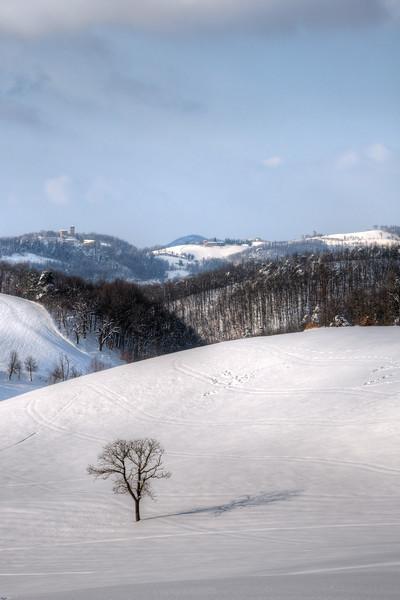 Lonely Tree - Carpineti, Reggio Emilia, Italy - February 5, 2012