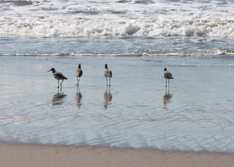 Four Shore Birds Sunset Beach