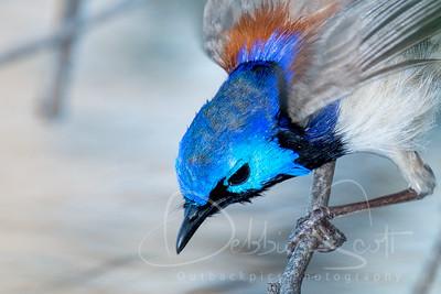 Outbackpics Birds