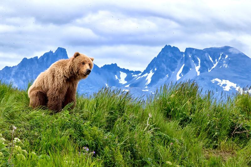 Alaska_2013_FH0T5213.jpg