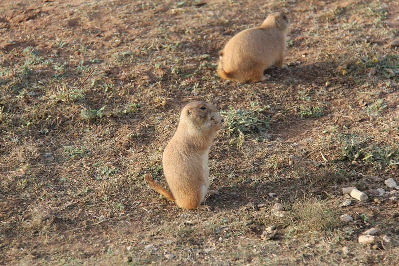 20171120-008 - Texas - Caprock Canyons SP - Prarie Dog Town.JPG