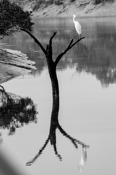 Egret-creative-black-and-white.jpg