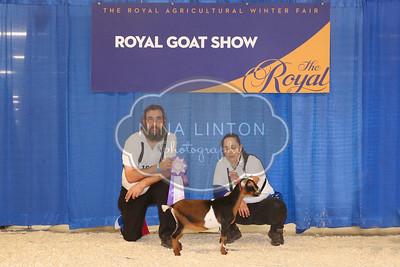 RAWF Dairy Goat Show Nigerian Dwarf Champions and Candids 2017
