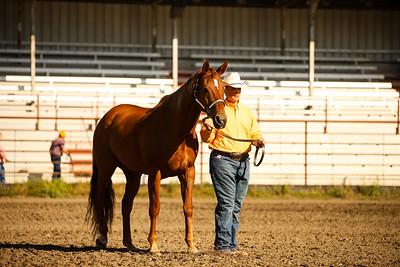 Horse Showmanship