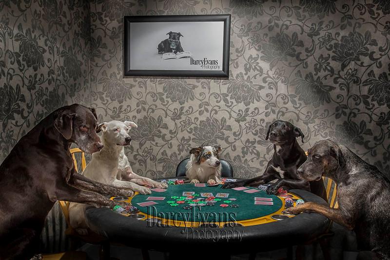 Doggy Poker-230-Edit-2-Edit.jpg