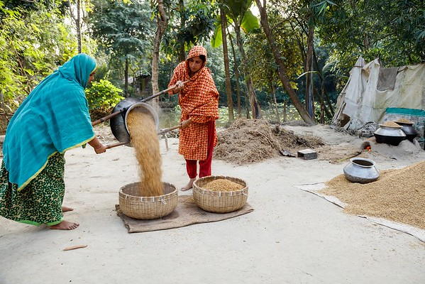 Zinc Rice Processing & value chain activities