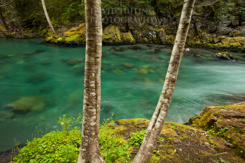 Spring in Mount Rainier