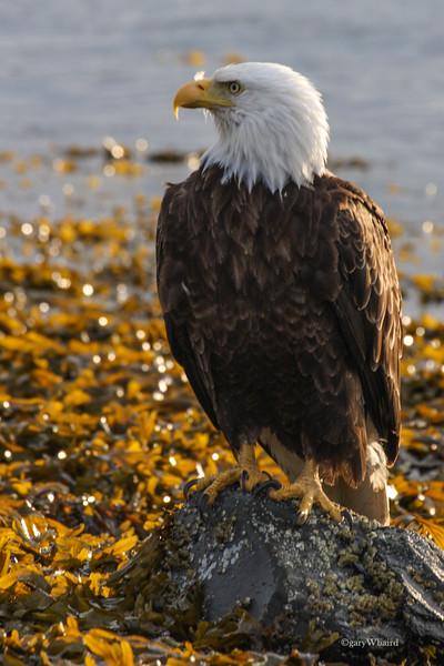 Rock Eagle.jpg