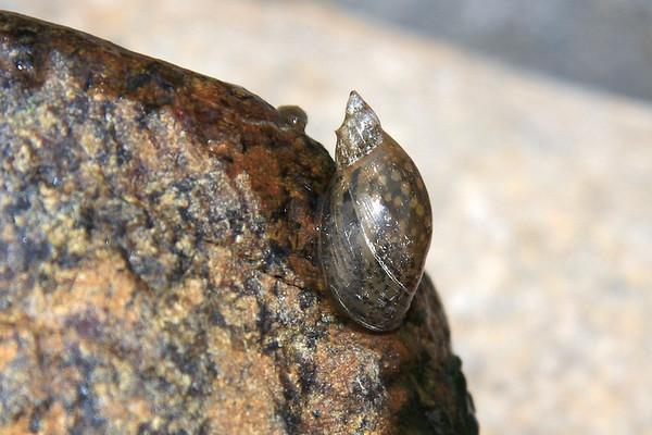 UAE marine wildlife