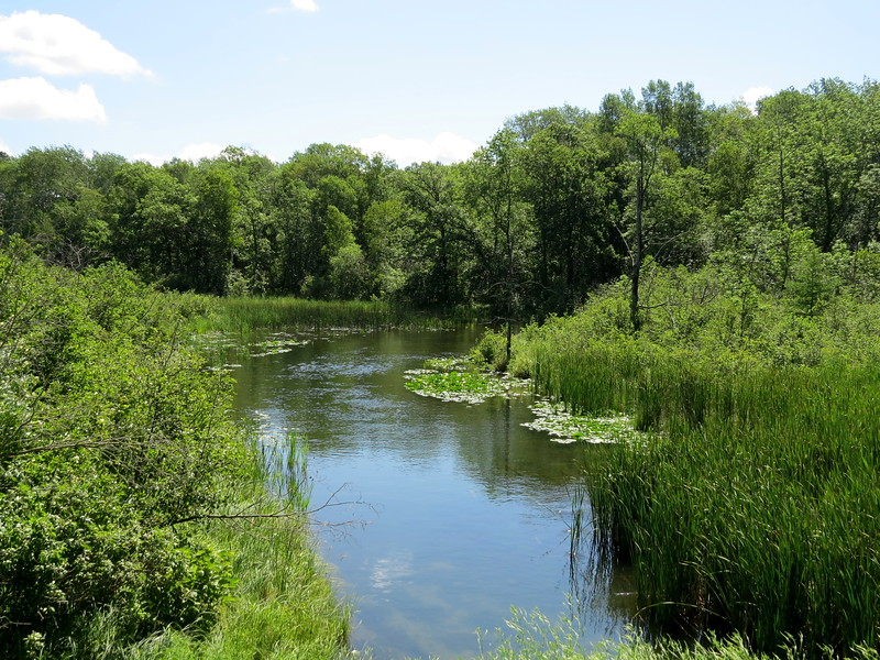 WISH I HAD A CANOE - WINDING Brook
