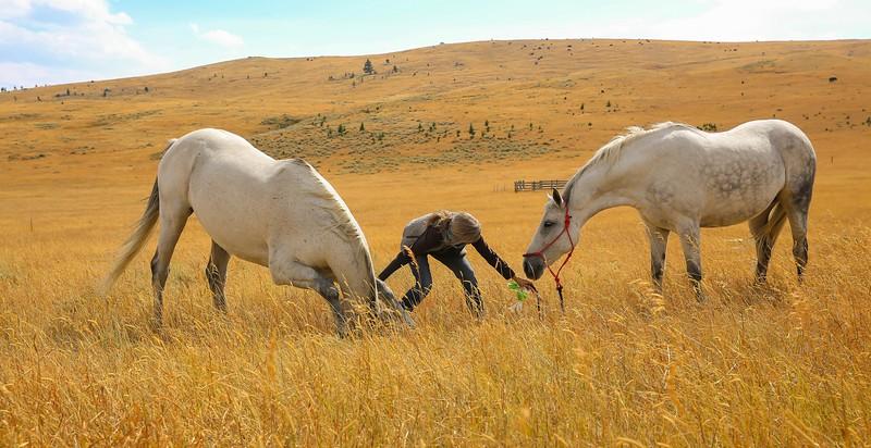 Horses 37.jpg