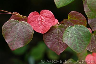 Bellevue Botanical Garden - Fall 2018