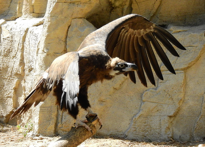 Denver Zoo 2018 (3205).JPG