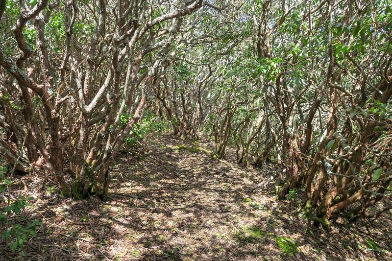 Old Butt Knob Trail -- 5,800'