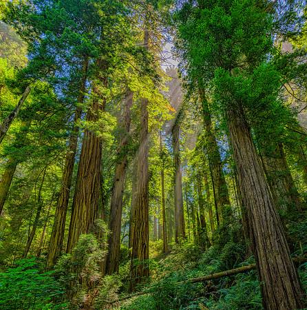 Del Norte Coast Redwoods State Park & Adjacent Redwood National Park Coastal Areas