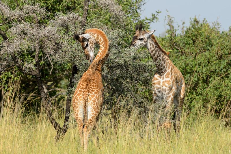 20160215__KET8007_Serengeti_Day_7.jpg