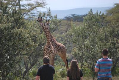 13-07-31 Kenyan Wildlife