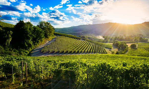 Categoria: Paesaggi & vigneto   Landscapes & vineyards