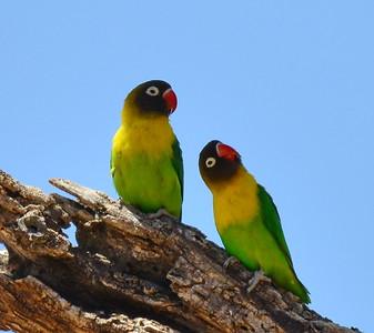 7. Birds of Tanzania / Vögel Tansania