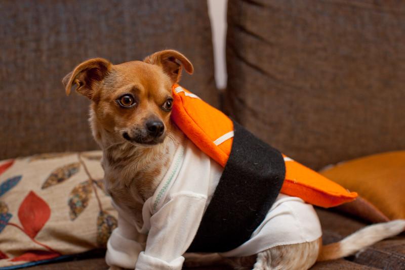 Dog-sushi-halloween-32.jpg