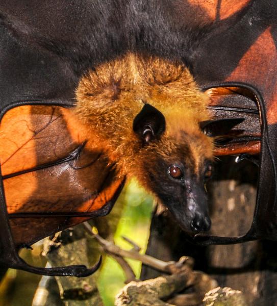 Bali Bats-9.jpg