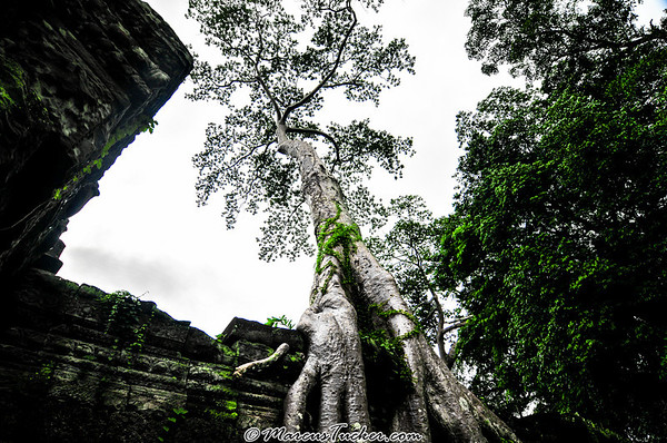 20080910 - Temples of Angkor #1