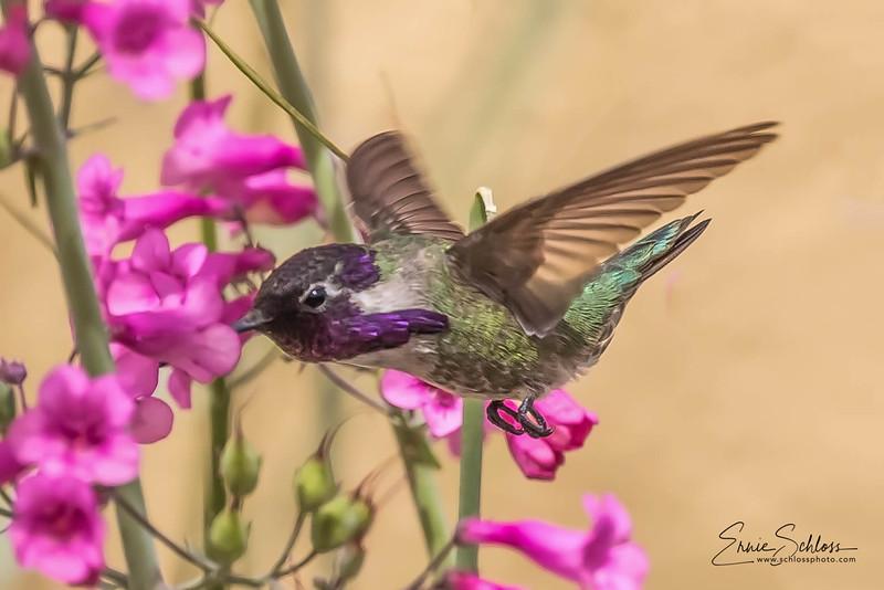 ASDM Birds 3-21-2018g-.jpg