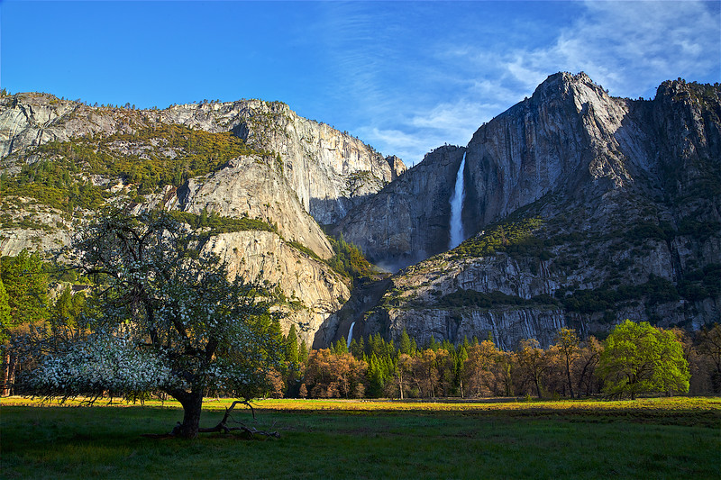 YOS-180426-0006 Yosemite Falls and Cooks Meadow Apple Tree 1