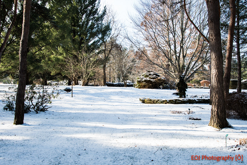 winter shoot-6.jpg
