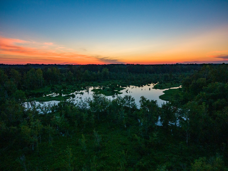 Sun over swamp.jpg