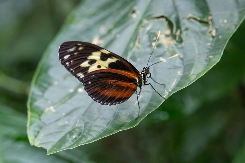 butterfly-178.jpg