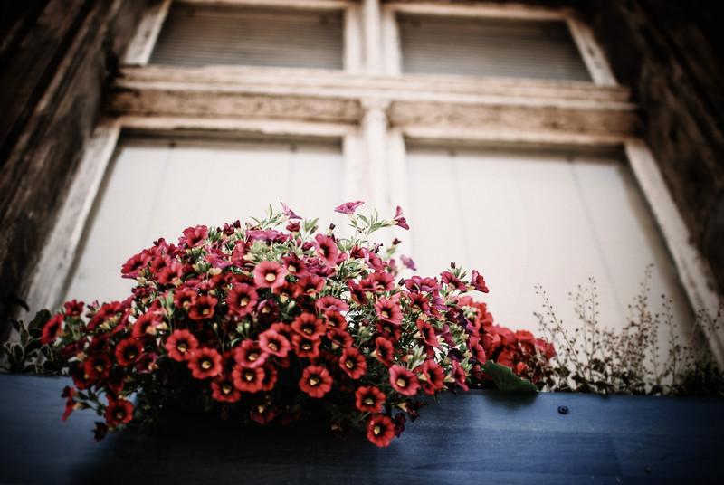 soon spring flowers window sil poznan LRG.jpg