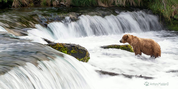 Katmai National Park 2014